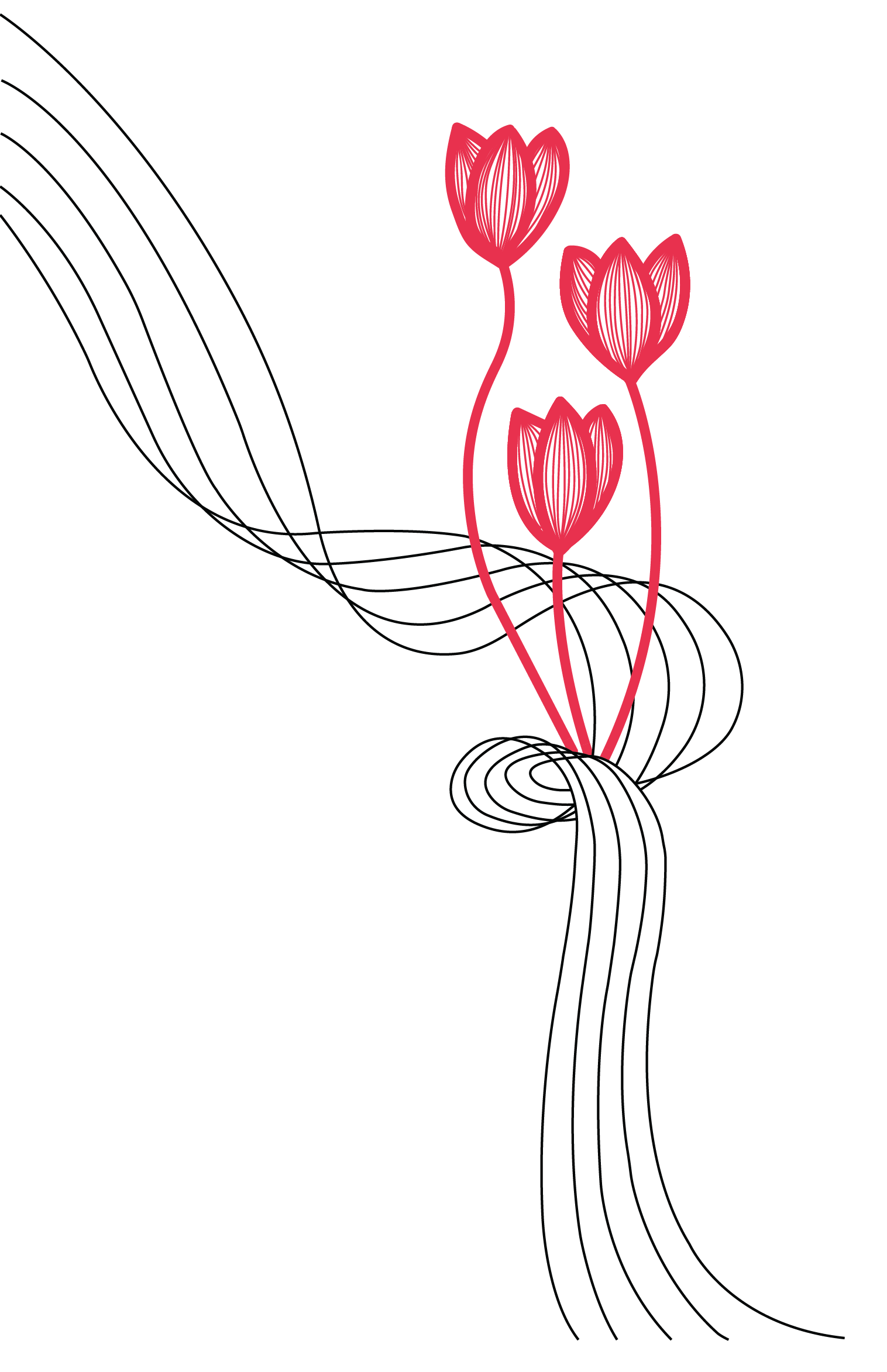 tulip_linework-03